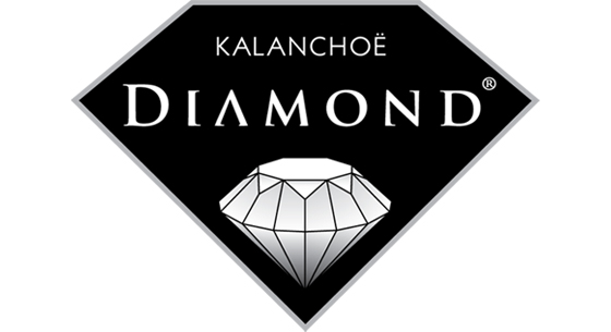 Diamond Kalanchoe